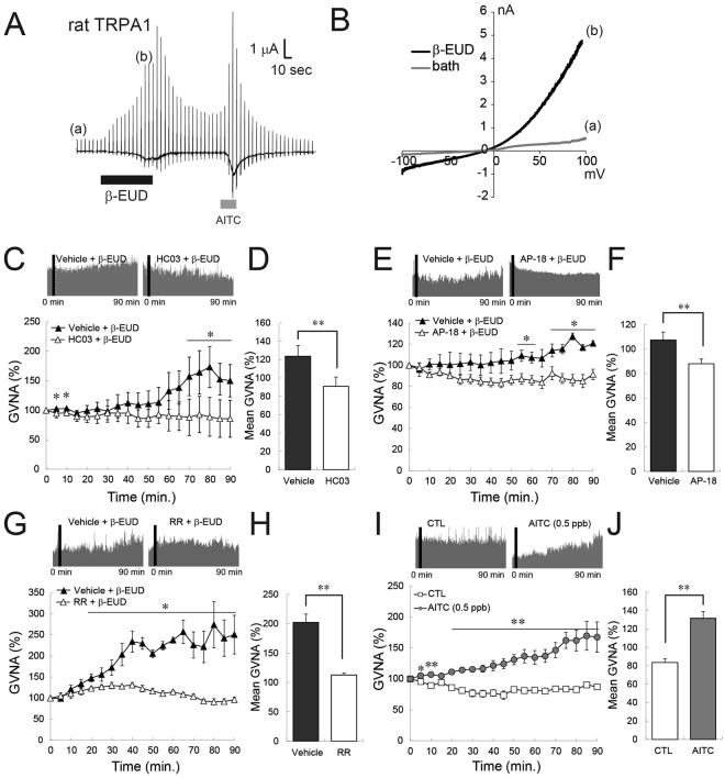 TRPA1 inhibitors and activators affected GVNA in rats and β-eudesmol activated rat TRPA1. ( A ) Representative traces of whole-cell patch-clamp currents activated by β-eudesmol (60 μM) in HEK293 cells expressing rat TRPA1. AITC (100 μM) was used as a TRPA1 stimulant. (a), (b) Indicate the points of ramp pulse application to generate curves I–V shown in ( B , C , D ). The effect of a selective TRPA1 inhibitor, HC-030031 (300 mg/kg), on β-eudesmol derived GVNA elevation (n = 3). ( E , F ). The effect of AP-18 (1 mg/kg), a selective TRPA1 inhibitor, on β-eudesmol derived GVNA elevation (n = 3). ( G , H ). The effect of a non-selective TRPA1 inhibitor, Ruthenium Red (1 mg/kg), on β-eudesmol derived GVNA elevation (n = 3). ( I , J ). The effect of a representative TRPA1 activator, AITC, on GVNA (n = 5). Values are means ± SEM. Statistical differences were analyzed by the Mann-Whitney U test. *p