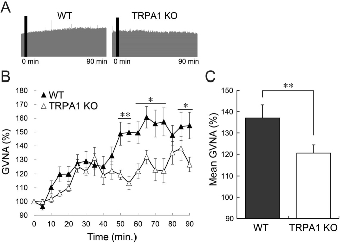 The effect of β-eudesmol on GVNA in TRPA1 knockout rats. ( A ) Representative recordings of GVNA in rats administered β-eudesmol (5 ppb) containing 0.5% CMC water. ( B , C ) The effect of β-eudesmol administration on GVNA (n = 6). Values are means ± SEM. Statistical differences were analyzed using the Mann-Whitney U test. *p