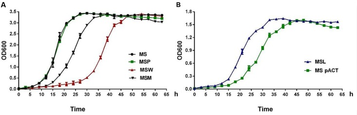 The expression of Rv2629 modulates the growth of M. smegmatis under aerobic conditions. The growth curve of recombinant M. smegmatis strains that exhibited reduced expression of Rv2629 and overexpression of the Rv2629 W and/or the Rv2629 M genes, respectively. The growth of the strains was measured by harvesting cultures at 3-h intervals and subsequent measurement of the absorbance values at 600 nm (OD 600 ). The abbreviations were: MS (wild type), MSP (control strain transformed with the pMV261 plasmid), and MSpACT (control strain transformed with the pACT plasmid). The results indicated (A) comparatively slow growth of MSW . (B) Comparatively rapid growth of MSL . The data are representative of two independent experiments with two samples in each experiment which shows similar results.