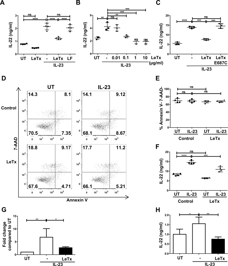 Lethal toxin down-regulates mouse IL-23-mediated production of IL-22 in ILC3s. ( A-C ) Rag1 -/- splenocytes were pretreated with (A) either lethal toxin (LeTx, lethal factor + protective antigen) or lethal factor (LF) (1 μg/ml) or (B) increasing doses of lethal toxin or (C) with enzymatic mutant toxin (E687C) for 3 hr followed by IL-23 (50 ng/ml) stimulation for 18 hr. Cell supernatants were analyzed for IL-22 secretion by ELISA. ( D-F ) Rag1 -/- splenocytes were treated with lethal toxin followed by IL-23 stimulation for 6 hr. Cell death was assessed by Annexin V and 7-AAD staining. (D) Shown are representative plots from one experiment of three. (E) Quantified apoptosis data and (F) IL-22 secretion from the same experiment are shown. ( G-H ) CD127 + ILCs were purified from spleens of Rag1 -/- mice and subjected to lethal toxin treatment as in A and measured for (G) Il22 mRNA expression and (H) IL-22 secretion after 6 hr of IL-23 stimulation. Shown are mean±SD from one experiment of at least three experiments (A-F). Shown are mean±SD from five experiments (G-H). * p≤0.05, ** p≤0.01, *** p