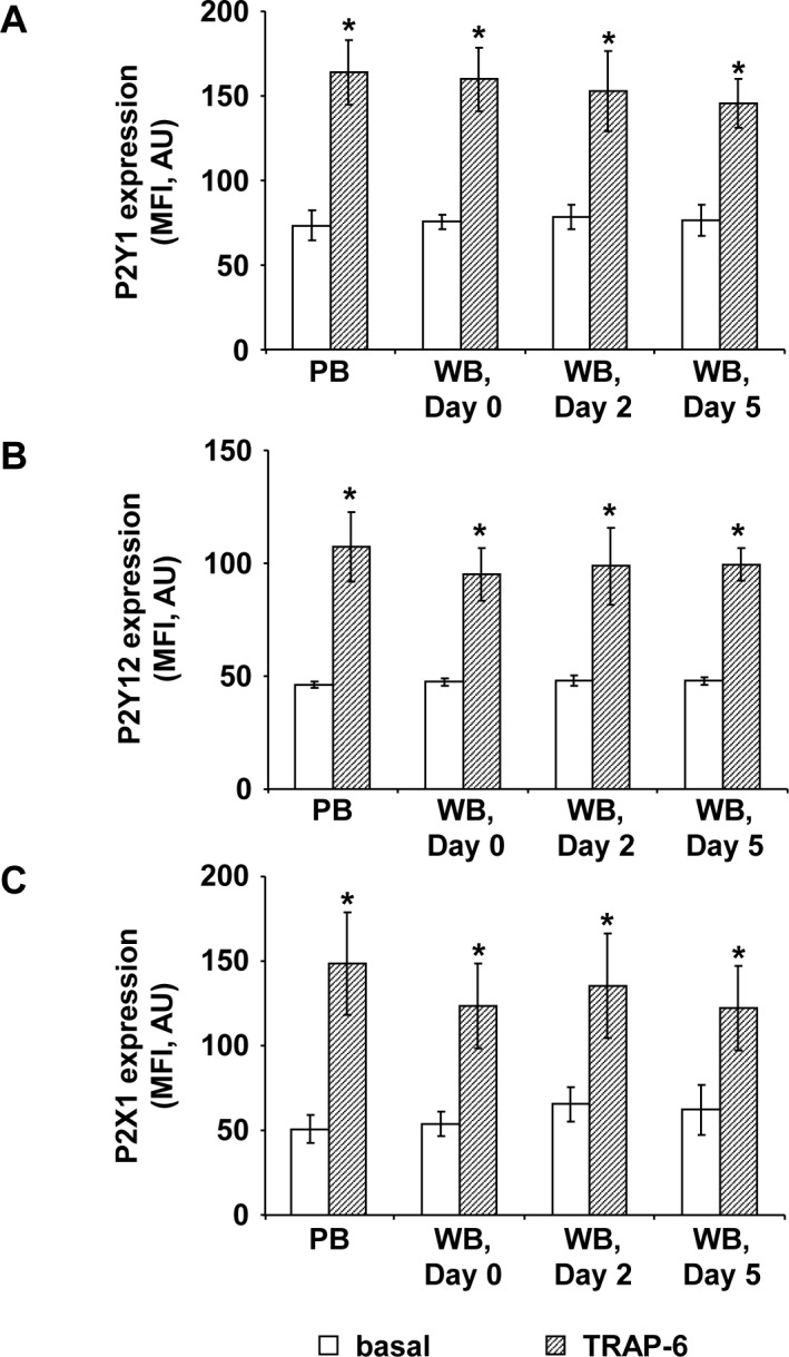 Platelet purinergic receptor expression in citrated WB is maintained during storage. The histograms show the mean fluorescence intensities (MFI) of basal (white columns) and 10 μM TRAP-6 stimulated (shaded columns) P2Y1- (A), P2Y12- (B), and P2X1- (C) receptor expression in fresh PB samples and in stored WB units at different time points as indicated. Results are presented in absolute arbitrary units (AU) as mean fluorescence ± SEM; n = 6; *: p