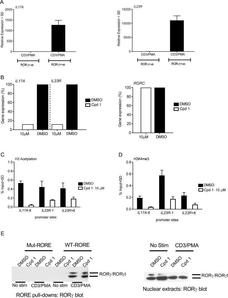 Cpd 1 blocks IL17A / IL23R gene expression by inhibiting permissive chromatin remodeling at their promoter regions. (A) RORγt or empty vector transduced HUT78 T-cells were stimulated with anti-CD3 antibody and PMA. IL17A and IL23R gene expression was analyzed by RT-PCR, which was performed on mRNA isolated after 24 hrs of stimulation. (B) RORγt transduced HUT78 T-cells were stimulated as described above in the presence of cpd 1 (10 μM) or DMSO and mRNA was prepared followed by analysis of IL17A , IL23R and RORC gene expression via RT-PCR. Gene expression levels are shown relative to DMSO treated cells (100%). (C and D) Stimulated cell lysates from cpd 1(10 μM) or DMSO-treated RORγt transduced HUT78 T-cells were cross-linked with 1% formaldehyde, sonicated and chromatin preparations were immunoprecipitated with H3K9/14 acetyl or H3K4me3-specific or isotype-specific control antibodies. The precipitated DNA was quantified by qPCR with primers specific for IL17A and IL23R promoter regions. The results were normalized to an input control. (E) RORγt transduced HUT78 T-cells were treated with cpd 1(10 μM ) or DMSO, stimulated with anti-CD3 antibody/PMA or left unstimulated (No stim) for 2 hrs and nuclear extracts were prepared. Nuclear extracts were equally divided into two and each half was subjected to pull-down experiments using mutated or wild-type biotinylated RORE oligonucleotides followed by immobilization of complexes with streptavidin Sepharose beads. After extensive washing pull-down complexes (left panel) or nuclear extracts (right panel) were subjected to SDS PAGE and RORγ Western blot analysis. Graphs and Western blots are representative of two independent experiments.