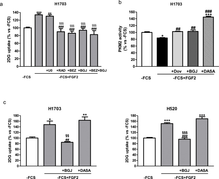 Role of AKT/mTOR and PKM2 in the regulation of FGF2-mediated glucose metabolism (a) H1703 cells, cultured in -FCS for 24h, were pre-incubated for 1h with 2μM U0126, 0.1μM NVP-BEZ235, 0.1μM RAD001, 1μM NVP-BGJ398 or a combination of NVP-BGJ398 with NVP-BEZ235. The cells were then stimulated with FGF2 and glucose uptake was assessed after 6h. (b) H1703 cells, cultured in -FCS for 24h, were pre-incubated for 1h with 1μM dovitinib, 1μM NVP-BGJ398 or 10μM DASA, and then treated with FGF2. PKM2 activity was measured after 4h. (c) H1703 and H520 cells, cultured in -FCS for 24h, were pre-incubated for 1h with 1μM NVP-BGJ398 or 10μM DASA, and then treated with FGF2. Glucose uptake was measured after 16h. Data are expressed as percent versus -FCS control cells and are mean values ±SD of three independent experiments. * P