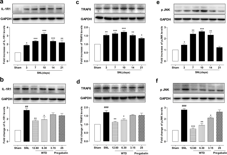 WTD decreased IL-1R1, TRAF6 expressions and p-JNK level in the dorsal horn of L5 spinal cord tissue Time course profile of IL-1R1, TRAF6 expressions, and p-JNK levels in the dorsal horn of the L5 spinal cord in sham- or SNL-operated mice (a, c, e) . Chronic administration of WTD (3.15-12.60 g/kg) dose-dependently reduced IL-1R1, TRAF6 expressions and p-JNK levels in spinal cord tissue, while pregabalin (25 mg/kg, p.o.) had no obvious effects on those factors (b, d, f) . Data are represented as mean ± SEM. (n=3). ## P