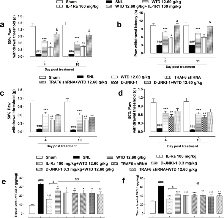 Anti-hyperalgesia and chemokines inhibitory effects of WTD co-administrated with specific inhibitors of IL-1R1/TRAF6/JNK signaling Pretreatment of IL1-Ra (100 mg/kg, i.p., 2 hours before), an inhibitor of IL-1R1, with WTD (12.60 g/kg, p.o., 1 hour before) significantly attenuated SNL induced mechanical allodynia, heat hyperalgesia and increased WTD analgesic effect (a, b) . Otherwise, neither co-administration of LV-TRAF6 shRNA (4 μl, intraspinal injection, 3 days prior to test), the specific inhibitor of TRAF6, nor D-JNKI-1 (0.3 mg/kg, i.p., 30 minutes before), the specific inhibitor of JNK with WTD (12.60 g/kg, p.o., 1 hour before) increased WTD's anti-allodynia effect (c, d) . Accordingly, co-administration of IL-Ra, but not LV-TRAF6 shRNA or D-JNKI-1 further reduced CCL2 (e) or CXCL1 (f) expressions. Data are represented as mean ± SEM. (n=6). ### P