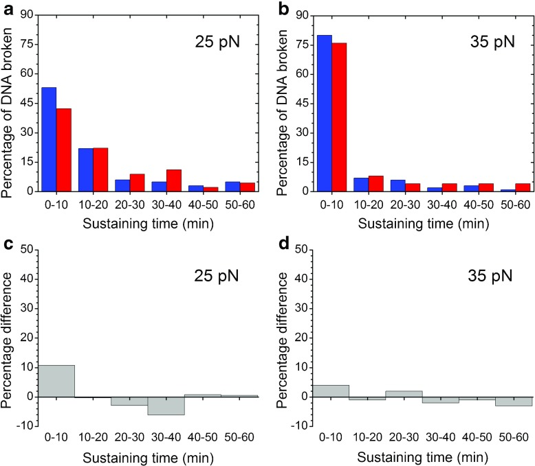 Sustaining times of non-frozen <t>lambda</t> <t>DNA</t> samples under 25 and 35 pN tension. The x -axis represents the DNA sustaining time (min), and the y -axis represents the percentage of all DNA molecules tested in TE buffer with 4.6% Tween 80. Blue histograms denote samples from batch 1, and red histograms denote samples from batch 2 in a and b . a Of 100 molecules tested from batch 1 at a tensile force of 24.6 ± 1.9 pN, 6% lasted over 60 min. Of 45 molecules tested from batch 2 at a tensile force of 24.9 ± 1.0 pN, 9% lasted over 60 min. b Of 100 molecules tested from batch 1 at a tensile force of 34.9 ± 1.8 pN, only one lasted over 60 min. All 25 molecules tested from batch 2 at a tensile force of 34.7 ± 1.7 pN were broken within 60 min. c Differences in the percentages of broken DNA between the two batches of non-frozen DNA samples at a tensile force of 25 pN. d Differences in the percentages of broken DNA between the two batches of non-frozen DNA at a tensile force of 35 pN