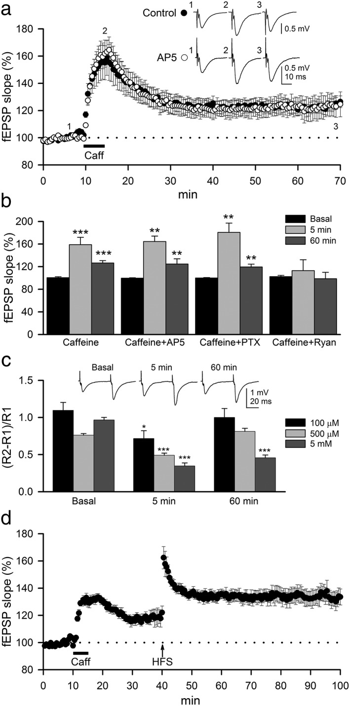 Caffeine induces an NMDAR‐independent LTP that does not occlude the classical LTP evoked by high frequency stimulation. (A) Summary of time‐course of mean fEPSPs slope in basal conditions and following bath application of 100‐μM caffeine (5 min, bar) in control slices (filled circles, n = 12; N = 7) and in the presence of 50‐μM AP5 (empty circles, n = 7; N = 3). Traces inset in the plots represent fEPSPs averages recorded during periods indicated by corresponding numbers in the graph. (B) Summary data showing mean fEPSP slopes in hippocampal slices before (Basal) and after (5 and 60 min) application of caffeine in control condition ( n = 12; N = 7; same as (A)) and in the presence of 50‐μM AP5 ( n = 7; N = 3), 50‐μM picrotoxin (PTX, n = 7; N = 3) and 20‐μM <t>ryanodine</t> (Ryan, n = 7; N = 3). (C) Mean average of paired‐pulse facilitation (PPF) at interstimulus interval of 50 ms in basal condition and after perfusion with caffeine at different concentrations (100 μM: n = 12; N = 6; 500 μM: n = 14; N = 6; 5 mM: n = 7; N = 3). Insets of tracings in the plots represent fEPSPs averages recorded in basal conditions and after 5 and 60 min of 100‐μM caffeine perfusion. (D) Summary data showing LTP induced by 100‐μM caffeine (5 min, bar) following by high frequency stimulation of SC (HFS ↑) after 30 min (filled circles, n = 11; N = 4). Significant differences with respect to basal state were established with Student's t ‐test at * P