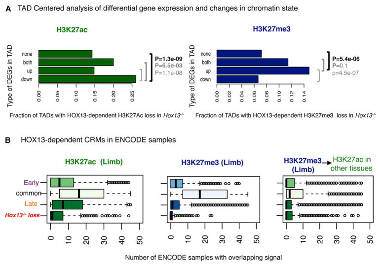 TAD-Centered Distribution of HOX13-Dependent CRMs and DEGs (A) TADs ( Dixon et al., 2012 ) classified based on the differential expression of genes in Hox13 −/− limbs. As compared to TADs showing no de-regulation in gene expression, those with downregulated gene(s) in Hox13 −/− late-distal buds show significantly more HOX13-dependent loss of acetylation (p = 1.3e-9, chi-square test). Similarly, TADs with upregulated gene(s) show HOX13-dependent loss of H3K27me3 in the mutant (p = 5.4e-6). (B) Boxplots showing the total number of non-limb ENCODE samples that show an enrichment for the indicated mark for different subsets of regions as defined throughout this study. The subset of regions with H3K27Ac or H3K27me3 loss in Hox13 −/− shows the highest tissue-specificity. The rightmost panel shows the subset of genes with HOX13-dependent H3K27me3 loss in the late-distal limbs but enriched for H3K27Ac in other tissues.