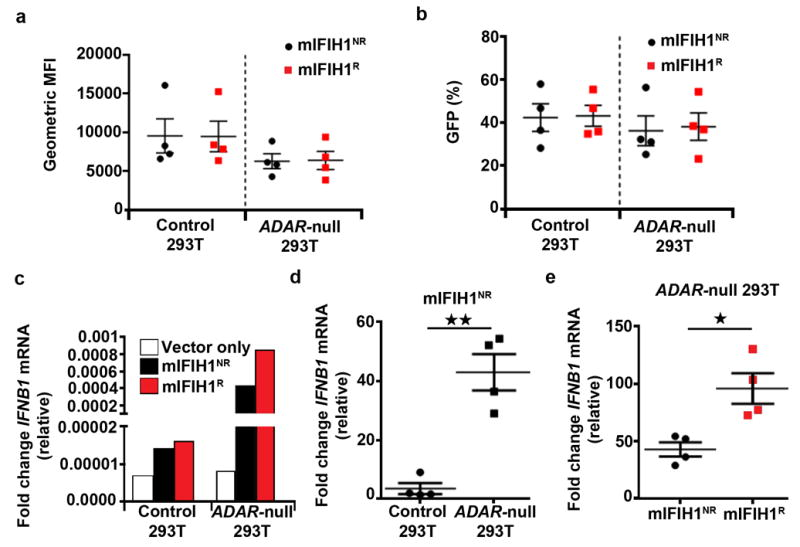 mIFIH1 R mediates increased sensitivity to self-RNA ligands (a-e) Control or ADAR- null HEK293T cells were generated by lenti-CRISPR technology. Cell lines were transfected with 1 μg of mIFIH1 risk or non-risk constructs shown in Fig 2 . Cells were analyzed by flow cytometry at 27 hours post-transfection for (a) geometric mean fluorescent intensity (MFI) and (b) percent GFP expression and combined data from four biological replicates are shown. (c-e) Quantitative RT-PCR for IFNB1 mRNA expression in control vs. ADAR- null cells transfected with mIFIH1 NR construct. (c) Representative data from one experiment. (d) Combined data from four biological replicates. (e) Relative levels of IFNB1 mRNA expression in mIFIH1 NR vs. mIFIH1 R transfected ADAR- null cells showing combined data from four biological replicates. Results were normalized by the Livak method as in Fig 2d . Statistical analysis performed using a two-tail student T test. Each data point represents one biological replicate. Error bars represent ± SEM. *p