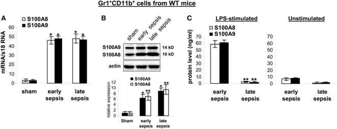 The S100A8 and S100A9 proteins are retained in Gr1 + CD11b + cells during late sepsis. Gr1 + CD11b + cells were isolated from the bone marrow cells by positive selection. The early and late sepsis groups, respectively, included mice that were killed between days 1–5 and 6–28 after cecal ligation and puncture. (A) Levels of S100A8 and S100A9 mRNAs. Total RNA was extracted from Gr1 + CD11b + cells, and mRNA levels were determined by real-time PCR. The S100A8 and S100A9 expression levels were normalized to 18S rRNA (* p