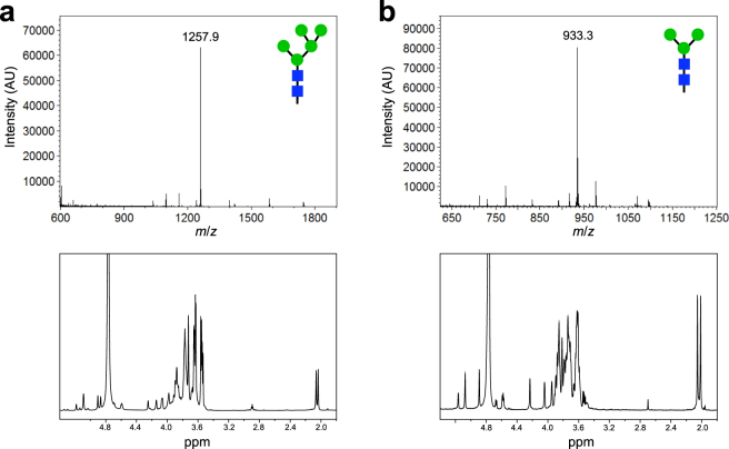 Biosynthesis of precursor oligosaccharides for enzymatic remodeling. MALDI-TOF MS analysis (top panels) and 600-MHz 1 H NMR characterization (bottom panels) corresponding to: ( a ) Man 5 GlcNAc 2 glycan synthesized by enzymatic deglycosylation of S. <t>cerevisiae</t> oligosaccharides; and ( b ) the Man 3 GlcNAc 2 glycan synthesized by glycoengineered E. coli cells.