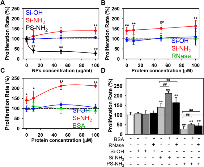 Inhibition of proliferation in Huh7 cell line by PS-NH 2 nanoparticles. ( A ) Cells were cultured in medium for 24 h in the presence or absence of hydroxyl- (Si-OH), amino-functionalized (Si-NH 2 ) silica, or amino-functionalized (PS-NH 2 ) PS NPs. Cell viability was assessed by the WST-1 assay. The data were normalized to control values (no particle exposure) and expressed as mean ± SEM, n = 3 each. ( B ) Analysis of cytotoxicity in Huh7 cultured with Si-OH, Si-NH 2 , or PS-NH 2 NPs bearing RNase as hard protein corona. Cells were cultured in the presence or absence of Si-OH or Si-NH 2 NPs (all 100 µg/ml) pre-incubated with increasing concentrations of RNase for 1 h. Cell viability was assessed by the WST-1 assay. The data were normalized to control values (no particle exposure) and expressed as mean ± SEM, n = 3 each. ( C ) Analysis of cytotoxicity in Huh7 cultured with Si-OH or Si-NH 2 , NPs bearing BSA as hard protein corona. Cells were cultured in the presence or absence of Si-OH or Si-NH 2 NPs (all 100 µg/ml) pre-incubated with increasing concentrations of BSA for 1 h. Cell viability was assessed by the WST-1 assay. The data were normalized to control values (no particle exposure) and expressed as mean ± SEM, n = 3 each. ( D ) Comparison of proliferative activity of Huh7 cultured with Si-OH, Si-NH 2 , or PS-NH 2 NPs bearing BSA or RNase (100 µM both) as hard protein corona or bare NPs. Cell were treated as in ( A – C ). The data were normalized to control values (no particle exposure) and expressed as mean ± SEM, n = 3 each.