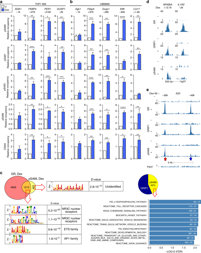 GRIP1 phospho-isoforms occupy GR target genes in a site-specific manner. THP1 cells ( a ) or BMMΦ ( b ) were incubated with dexamentasone (Dex) for 1 h, and the occupancy of phospho- (p)S469-, pS487-, pS493-, and pS499-GRIP1 as well as CDK9 was assessed at GRIP1-occupied sites from Fig. 1 by ChIP-qPCR as in Fig. 1f . Mean + SEM are shown ( n ≥ 3, * P