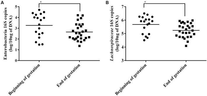 Enterobacteria (A) and Lachnospiraceae (B) <t>16S</t> <t>rRNA</t> gene copies in sow fecal content at beginning and end of gestation. Horizontal bars represent the mean of each group, each point represent the fecal content of a single sow. ∗ Indicates p