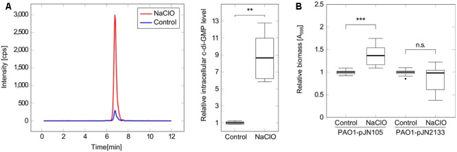 Implication of c-di-GMP in the response of P. aeruginosa PAO1 to NaClO. (A) P. aeruginosa PAO1 was incubated with NaClO (8 μg/ml, OD 600 = 1.0, BM2) for 1h followed by nucleotide extraction and quantification of intracellular c-di-GMP by LC-MS. Levels of c-di-GMP were normalized to the total protein content of the respective sample and compared to c-di-GMP levels in untreated controls ( n = 6). The chromatogram shows c-di-GMP peaks of one representative measurement. (B) Attachment of P. aeruginosa in response to NaClO during overexpression of the c-di-GMP-degrading PDE PA2133 was evaluated by crystal violet staining. PAO1-pJN2133 and the vector control strain PAO1-pJN105 were incubated in 96-well microtiter plates either in the presence or in the absence of NaClO (2 μg/ml) for 2 h at 37°C followed by the quantification of biofilm biomass. BM2 was supplemented with 0.1% (w/v) arabinose to induce recombinant gene expression. Experiments were repeated four times, each with six wells per strain and condition ( n = 24). Absorbance at 595nm (A 595 ) was determined and obtained values for NaClO-treated samples were normalized against the A 595 of respective untreated controls (=relative biomass). Statistical significance was evaluated by the Mann–Whitney test ( ∗∗∗ p ≤ 0.001, ∗∗ p ≤ 0.01, n.s., not significant). Boxes include median (thick horizontal line), 25th and 75th percentiles. Dots indicate extreme values considered as outliers.