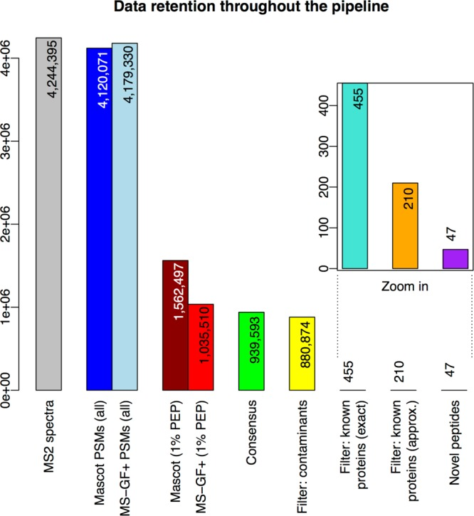 """Data retention throughout the pipeline. The bars show the numbers of """"data elements"""" (spectra, PMSs, and peptides) under consideration as these numbers decrease from the start (left) to the end (right) of the proteogenomics pipeline. In detail, the bars represent the following (node numbers refer to the TOPPAS workflow in Figure 2 ): <t>""""MS2</t> spectra"""", input MS2 spectra in the C-HPP testis data set; """"Mascot/MS-GF+ PSMs (all)"""", spectra that generated PSMs using either search engine; """"Mascot/MS-GF+ (1% PEP)"""", PSMs after PSM-level filtering (node 15); """"Consensus"""", PSMs after ConsensusID (node 16); """"Filter: contaminants"""", PSMs after filtering for contaminants (node 18); """"Filter: known proteins (exact)"""", PSMs after filtering for exact matches to known proteins (node 20); """"Filter: known proteins (approx.)"""", PSMs after filtering for approximate matches to known proteins (final set; node 22); and """"Novel peptides"""", distinct novel peptides identified by the final set of PSMs."""