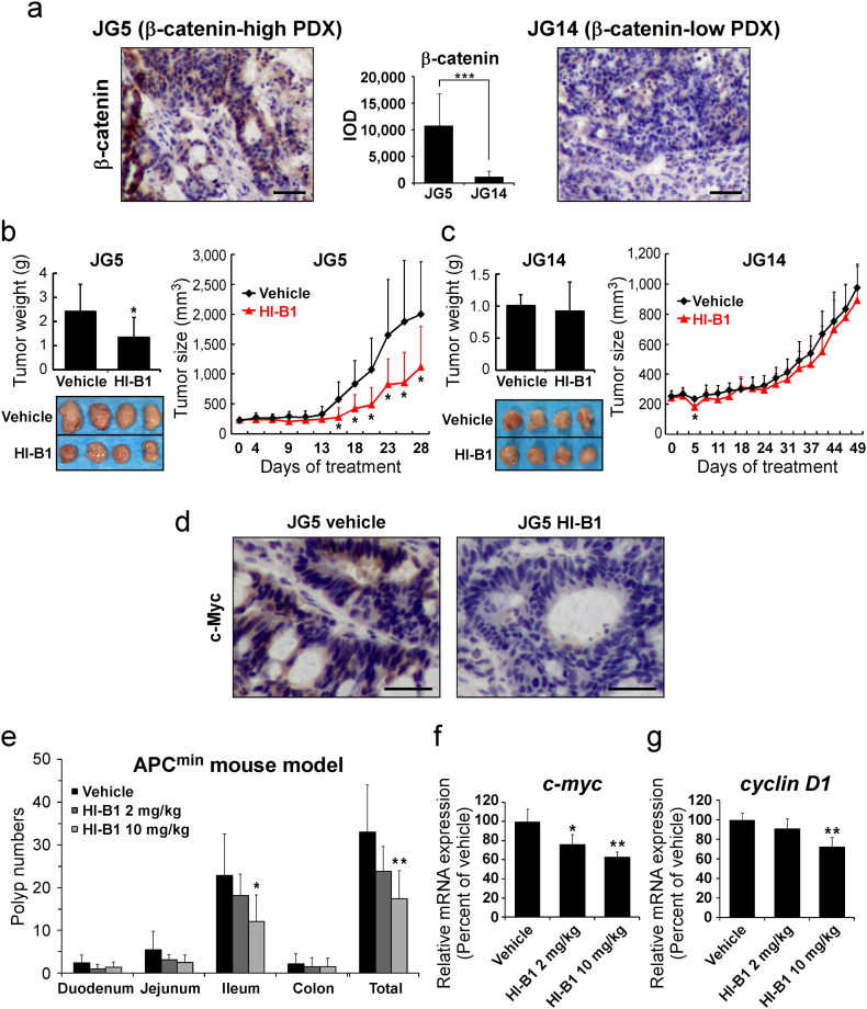 HI-B1 inhibits β-catenin-driven tumorigenesis in vivo . (a) β-Catenin expression levels in colon cancer PDX samples were examined by immunohistochemistry (IHC) and its integrated optical density (IOD) was quantified using Image-Pro Plus software (v.6.1) program (Media Cybernetics, Bethesda, MD). Scale bar: 50 μm. (b and c) HI-B1 was administered per os (p.o) (orally) three times a week at a dose of 50 mg/kg ( n = 8/group) to JG5 (b) and JG14 (c) tumors. Tumor size was measured three times a week and the weight was measured at the end of experiments. (One-way ANOVA and Dunnett's test; *P