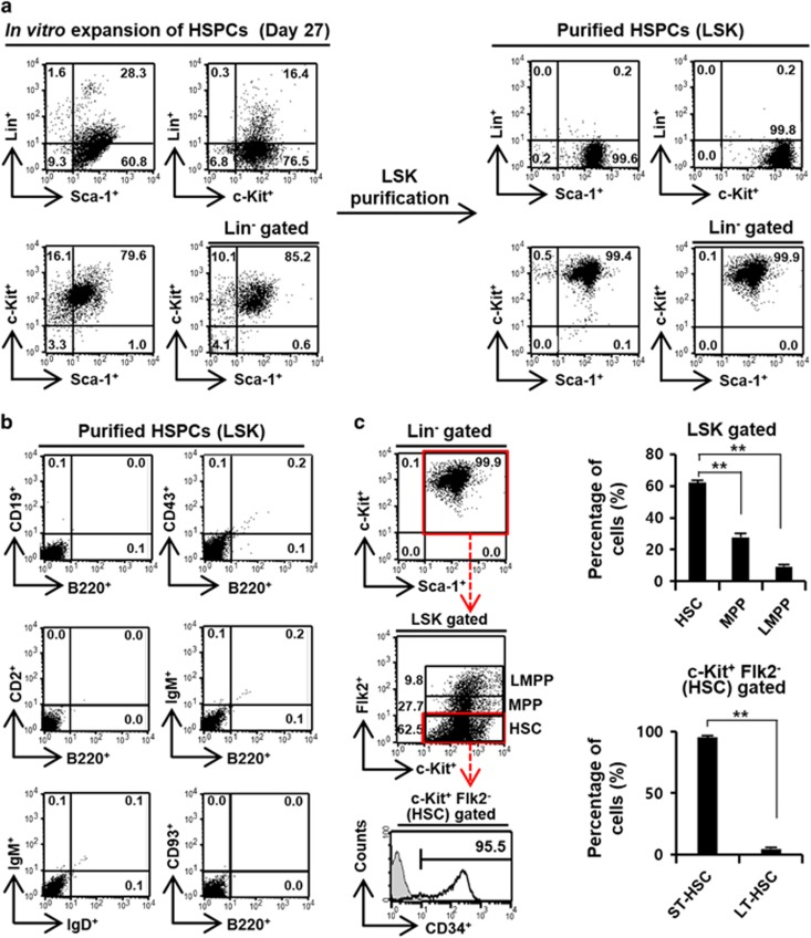 In vitro expansion and isolation of Lin − <t>Sca-1</t> + c-Kit + HSPCs. ( a ) In vitro expansion of HSCs. Bone marrow-derived HSPCs were expanded by treatment with FLT3L (100 ngml −1 ), TPO (100 ngml −1 ) and SCF (100 ngml −1 ) for 27 d. The expanded cell populations were analyzed via flow cytometry with anti-Lin, Sca-1 and c-Kit antibodies (left panel). Lin − Sca-1 + c-Kit + (LSK) cells were isolated from 27 d of expanded culture using an HSC isolation kit. The isolated LSK cells were analyzed via flow cytometry with anti-Lin, Sca-1 and c-Kit antibodies (right panel). ( b ) The contamination of isolated LSK cells by B-lineage cells. Isolated Lin − Sca-1 + c-Kit + HSPCs were analyzed via flow cytometry with anti-B220, CD19, CD43, CD2, IgM, IgD and CD93 antibodies. ( c ) Analysis of isolated Lin − Sca-1 + c-Kit + HSPCs. Lin − gated cells (bolded box) were analyzed via flow cytometry with anti-Sca-1 and c-Kit antibodies (left top panel). For the analysis of the HSC, MPP and LMPP populations of HSPCs, the LSK cells were analyzed with anti-c-Kit and Flk2 antibodies (left middle panel). The averaged percentages of the HSC, MPP and LMPP populations among HSPCs were summarized (right top panel). The populations of LT-HSC and ST-HSC in the HSC (c-Kit + Flk2 − )-gated cells (bolded box) were further analyzed with anti-CD34 antibody (left bottom panel). The averaged percentages of LT-HSC and ST-HSC population in HSC-gated cells were summarized (right bottom panel). ** P