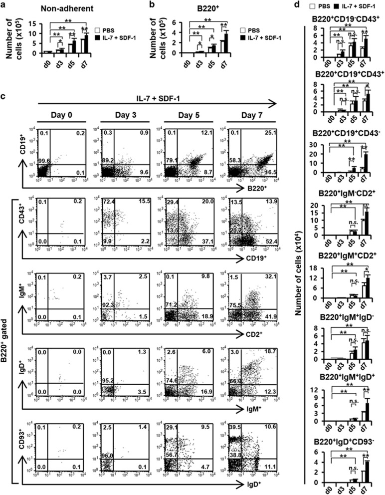 In vitro B lymphopoiesis of Lin − Sca-1 + c-Kit + HSPCs in coculture with OBN4 cells. ( a ) The increase in the number of non-adherent cells under coculture. LSK cells (10 5 cells per well of a 6-well plate) isolated as shown in Figure 4 were cocultured on monolayers of the OBN4 cells (6 × 10 4 cells per well) in the presence or absence of IL-7 (100 ngml −1 ) and SDF-1 (100 ngml −1 ) for 7 d. Black box, cytokine treatment. Open box, phosphate-buffered saline (PBS, non-cytokine treatment). ( b ) The increase in the number of B220 + cells under coculture. ( c ) In vitro B lymphopoiesis of HSPCs in coculture with OBN4 cells in the presence of IL-7 and SDF-1. The development of B-lineage cells was analyzed via flow cytometry with antibodies against B220, CD2, CD19, CD43, CD93, IgM and IgD during coculture with OBN4 for 7 d. The presented numbers indicate the percentage of each cell population. ( d ) The average numbers of B-lineage cells produced during coculture with OBN4 cells were summarized. NS, not significant. * P