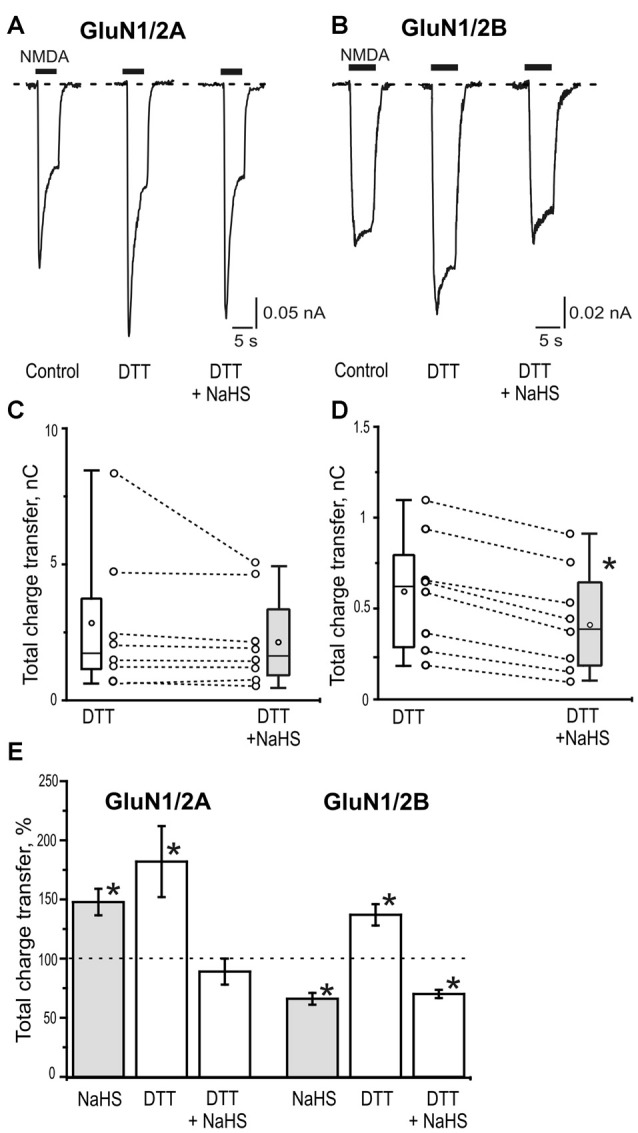 The role of disulfide bonds reduction in the effects of NaHS on GluN1/2A and GluN1/2B receptors. Representative current traces activated by 100 μM NMDA + 30 μM glycine (5 s, black bar) in control, after application of 2 mM dithiothreitol (DTT) and 2 mM DTT+100 μM NaHS in HEK293T cells expressing GluN1/2A (A) or GluN1/2B (B) receptors. Statistical plot of NMDA induced total charge transfer in the presence of 2 mM DTT and DTT+NaHS. Each pair of connected circles corresponds to an individual HEK293T cell expressing GluN1/2A ( C ; n = 8) and GluN1/2B ( D ; n = 8). Boxes indicate 25–75 percentiles in control (white) and in NaHS (gray), black line—median, the circle inside—mean value, whiskers—minimal and maximal values, * p