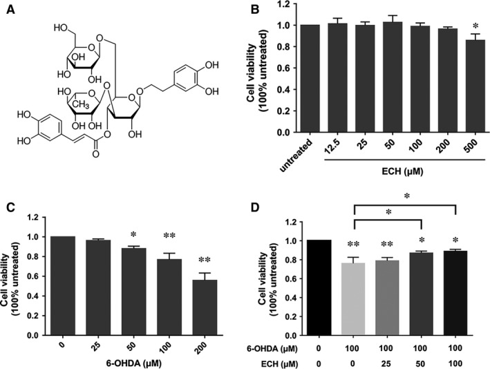 Protective effect of ECH on viability of PC12 cells injured by 6‐OHDA. Cell viability was determined by MTT assay. Data are expressed as percentage of the viability of cells, control taken as 100% viability. ( A ) The chemical structure of echinacoside (ECH). ( B ) Effect of different concentration of ECH on cell viability in PC12 cells (determine the non‐toxic dosages of ECH). PC12 cells were incubated with ECH (12.5–500 μM) for 24 hrs. ( C ) Effect of different concentration of 6‐OHDA on cell viability in PC12 cells (determine the toxic dosages of 6‐OHDA). PC12 cells were treated with various concentrations of 6‐OHDA (0–200 μM) for 24 hrs. ( D ) Effect of ECH on cell viability changes in 6‐OHDA‐induced PC12 cells. PC12 cells were pre‐incubated with different concentration of ECH (0, 25, 50, 100 μM) for 1 hr. Then, 6‐OHDA was added to the wells at a final concentration of 100 μM and incubated for another 24 hrs at 37°C. Data were shown as mean ± S.D., n = 4, * P