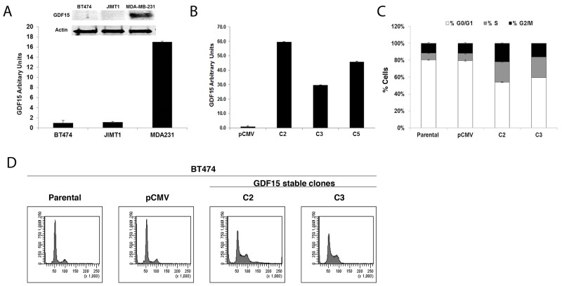 GDF15 overexpression alters breast cancer cell cycle profile (A) Western blotting ( above ) and real-time PCR ( graph ) for GDF15 in BT474, JIMT1 and MDA-MB-231 (MDA231) breast cancer cell lines. PCR values reflect fold change in GDF15 transcript normalized to RPLPO housekeeping gene. Error bars represent standard deviation between triplicate samples; experiments were repeated at least 3 times. (B) Real-time PCR for GDF15 in BT474 pCMV stable empty vector control clone (pCMV) and GDF15 stable clones 2, 3, and 5 (C2, C3, and C5). Values reflect fold change in GDF15 transcript level normalized to RPLPO housekeeping gene. Error bars represent standard deviation between triplicate samples; experiments were repeated at least 3 times. (C-D) BT474 parental, pCMV empty vector control clone (pCMV), and GDF15 stable clones 2 and 3 (C2, C3) were fixed, stained with propidium iodide, and analyzed for DNA content by flow cytometry. The percentage of cells in each cell cycle phase is shown per cell line (C) (white, G0/G1; gray, S; black, G2/M). Error bars represent standard deviation between triplicate samples; experiments were repeated at least 3 times. Representative cell cycle histograms are shown per line (D).