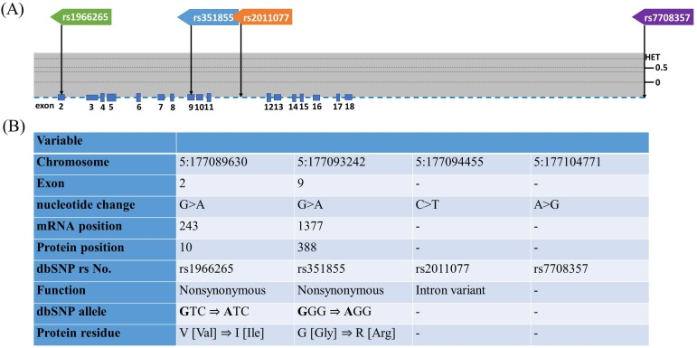 Exon and intron position of FGFR4 gene in human and FGFR4 gene polymorphisms assessed in study (A) The position of four SNPs of FGFR4 gene from the chromosome chr 5:177089630 to 177104771 (reference genome GRCh38.p7). The lower panel shows population-specific heterozygosity frequencies of this polymorphism in East Asian population (HAPMAP-CHB). (B) FGFR4gene polymorphisms assessed in this study.