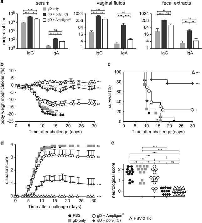 ID vaccination with HSV-2 gD glycoprotein with Poly(I:C) induces mucosal and systemic immunity and protects from lethal vaginal HSV-2 infection. ( a ) Mice were immunised ID with HSV-2 gD alone or together with Poly(I:C) or Ampligen and gD-specific IgG and IgA were measured 7 days after the last immunisation, in serum, vaginal fluids and fecal extracts. Data represent mean+s.e.m. of Ab titres of six experiments each using 6–7 mice per group. ( b – e ) Mice were injected three times ID with either PBS, gD alone, gD+Poly(I:C), gD+Ampligen or once ivag with HSV-2 tk − . One week after the last immunisation, mice were challenged ivag with 10 4 plaque-forming units (PFU) of virulent HSV-2 and protection against infection was followed by body weight change ( b ), survival ( c ), clinical score ( d ) and neurological score ( e ). Data correspond to a pool of two experiments ( b – e ) each with 6–7 mice per group. Statistical analyses were performed using the Kruskall Wallis test and Dunn's multiple comparisons ( a , e ), the two-way analysis of variance (ANOVA) test and Bonferroni's multiple comparisons ( b , d ) and the Gehan–Breslow–Wilcoxon test ( c ). Asterisks ( b – d ) indicate significance compared with the PBS control group.