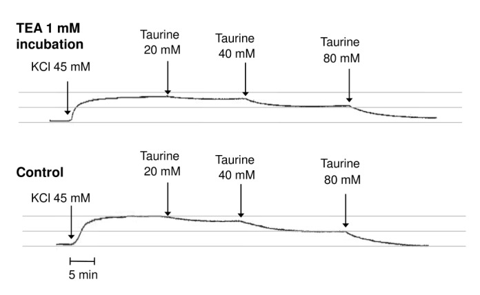 Original tracings showing vasorelaxations to taurine (20, 40, 80 mM) in KCl (45 mM)-precontracted human radial artery rings in the absence (control) and presence of tetraethylammonium (TEA, 1 mM).