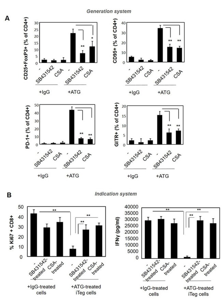 Pre-treatment with SB431542 or CSA interferes with ATG-mediated Treg induction PBMCs were incubated during 48 hours with either IgG or ATG (60 µg/ml), in the absence or presence of SB431542 (20 µM) or CSA (1 µg/ml ). A. Expression of Treg markers was evaluated by flow cytometry. Percentage of CD4+ cells expressing CD25+/Foxp3, CD95, PD-1 and GITR are presented as mean of triplicates ±STDEV, ** p