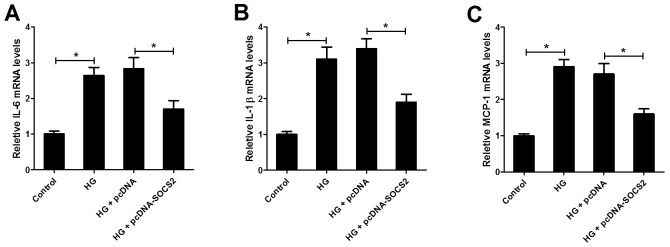 Effect of SOCS2 overexpression on the expression of IL-6, IL-1β and MCP-1 in HG-stimulated podocytes qRT-PCR was used to detect the mRNA expression of IL-6 (A) , IL-1β (B) and MCP-1 (C) in control group, HG group, HG + pcDNA group and HG + pcDNA-SOCS2 group * P