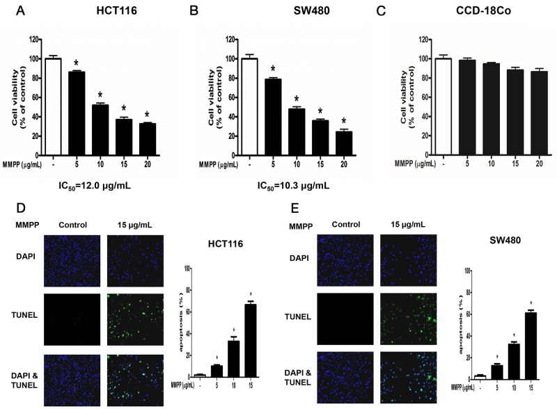 Effect of MMPP on the growth colon cancer cells and colon epithelial normal cells Concentration-dependent inhibitory effect of MMPP on cancer cell growth was found in HCT116 and SW480 colon cancer cells but not in CCD-18Co colon epithelial normal cells. (A) , (B) (C) HCT116, SW480 and CCD-18Co cells were treated with MMPP (0-20 μg/mL) for 24 h, and then relative cell survival rate was determined by MTT assay. Data was expressed as the mean ± S.D. of three experiments. * p