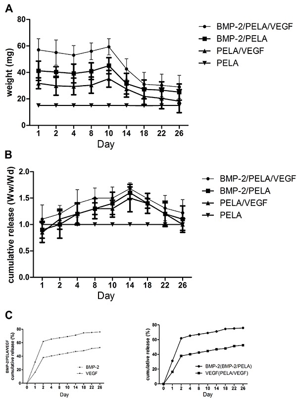 Weight loss ( A ), swelling ratio ( B ) and cumulative release profile ( C ) of BMP-2/PELA/VEGF scaffolds in PBS at 37°C. Data are reported as means±SD. BMP-2: bone morphogenetic protein-2; PELA: polylactide-poly (ethylene glycol)-polylactide; VEGF: vascular endothelial growth factor; Ww: wet weight; Wd: dry weight.