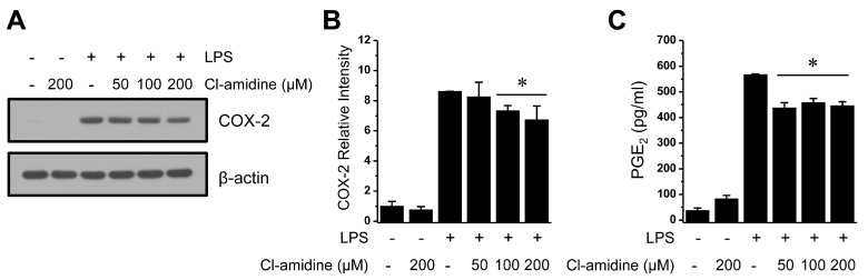 Mild suppression of COX-2 expression and PGE 2 production by Cl-amidine treatment. ( A ) LPS (0.1 μg/mL)-treated or -untreated DCs (1 × 10 7 cells) were cultured in the absence or presence of Cl-amidine (50, 100, and 200 μM) for 24 h. COX-2 expression was measured by Western blotting with an anti-COX-2 antibody. β-actin was used as the loading control. ( B ) Columns represent the relative intensity of COX-2 from three independent experiments. ( C ) DCs (1 × 10 5 cells) were stimulated with LPS (0.1 μg/mL), with or without Cl-amidine (50, 100, or 200 μM), for 24 h. PGE 2 production was measured as described in the Materials and Methods (mean ± SD; n = 3). * p