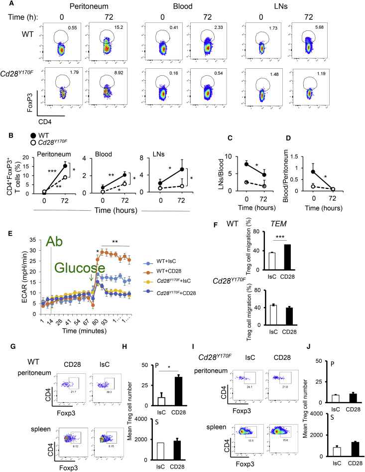 CD28-Induced Migration and Metabolic Reprogramming Require PI3K but Not mTORC-1 Activation WT and Cd28 Y170F mice received an i.p. injection of Zymosan. Samples were collected either before or 72 hr after the injection. The presence of Treg cells in the indicated tissues was measured by flow cytometry. (A) Representative dot plots from 2 independent experiments. (B) The mean percentage of cells measured in two experiments of identical design ± SD. (C and D) Ratio of cells retrieved in the indicated tissues over time ± SD (n = 3). (E) ECAR (±SD) of antibody-stimulated Cd28 Y170F and WT Treg cells was compared using fluxometry. n = 4, N = 2. (F) Migration of antibody-stimulated Cd28 Y170F and WT Treg cells through IFN-γ-treated EC monolayers. Results are expressed as mean percentage of migrated cells after 24 hr ± SD. N = 4. (G–J) Equal numbers of antibody-stimulated PKH26-labeled WT or Cd28 Y170F Treg cells were injected i.v. into syngeneic mice treated with IFN-γ i.p. 48 hr earlier. Cells were harvested from the indicated tissues 24 hr later, counter-stained for Foxp3, and analyzed by flow cytometry. Representative dot plots of 2 independent experiments are shown in (G) and (I). The bar graphs in (H) and (J) indicate mean absolute numbers of labeled cells (n = 4, N = 2) ± SD. ∗ p