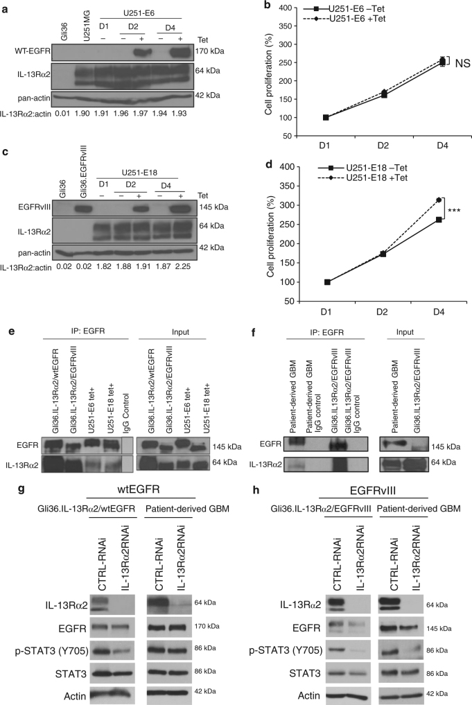 Enhanced cellular proliferation mediated by IL-13Rα2 is specific to EGFRvIII, and not WT EGFR. a U251-E6 or c U251-E18 cells were treated with or without tetracycline (Tet). At indicated time points, immunoblot analysis was carried out. Gli36, Gli36.EGFRvIII cell lysates were included as negative or positive controls for EGFRvIII, respectively. Growth kinetics of b U251-E6 and d U251-E18 was determined by CCK-8 assay. Percent cell viability was normalized to day 1 (without induction). All data are represented as mean ± SEM. Unpaired t -test *** p