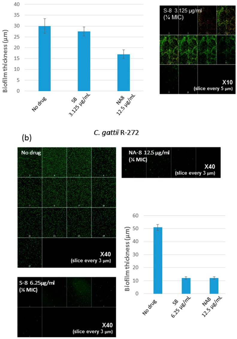 Effect of sub-inhibitory concentrations of S-8 and NA-8 on the biofilm thickness of C. neoformans ( a ) Treatment of C. neoformans H-99 during biofilm formation with NA-8 but not S-8 reduced biofilm thickness; ( b ) Treatment of C. gattii R-272 during biofilm formation with S-8 and NA-8 reduced biofilm thickness. Medium with 0.5% DMSO was used as a control. Mean ± SE. ×40.