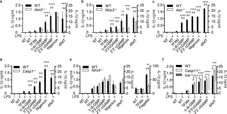 cGAMP induces AIM2-NLRP3-ASC inflammasome. IL-1β ELISAs from supernatants of LPS-primed BMDMs transfected with the indicated PAMP or DAMP. BMDMs were obtained from WT or Aim2 −/− (a), Nlrp3 −/− (b), Asc −/− (c), Casp1 −/− (d), Nlrc4 −/− (e), and Casp11 −/− and Ice −/− (f). NT, not transfected with PAMP; TFXN, transfected with transfection reagent only. n = 3 independent experiments ± SEM. **, P
