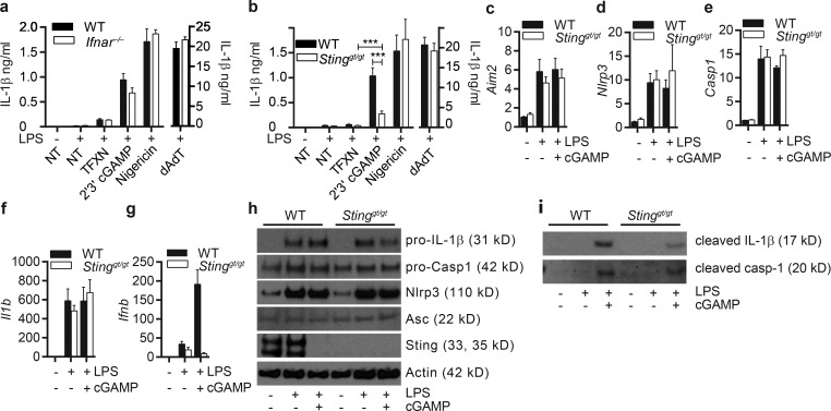 cGAMP-induced inflammasome activation after LPS priming is partially dependent on Sting. (a and b)WT and Ifnar −/− (a) or Sting gt/gt (b) BMDMs were LPS-primed followed by transfection with cGAMP as indicated for 6 h, and supernatants were measured for IL-1β. (c–g) mRNA levels as determined by qPCR of Aim2 (c), Nlrp3 (d), Casp1 (e), Il1b (f), and Ifnb (g). (h and i) Immunoblots of lysates (h) or supernatants (i) from the same experiment. n = 5 independent experiments ± SEM. ***, P
