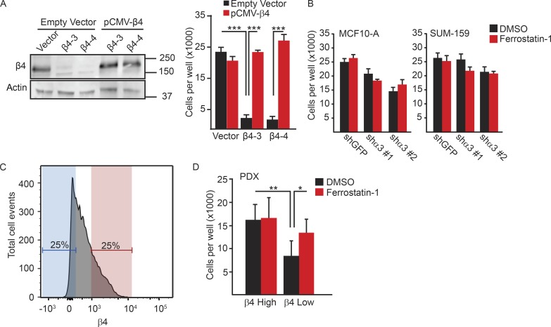 Evasion of ferroptosis is specific to the α6β4-integrin. (A) β4-depleted SUM-159 cells were transfected with either a control plasmid (vector) or a β4 expression construct in which the PAM sequences targeted by the guide RNAs were mutated. Rescue of β4 expression was confirmed by immunoblotting and qPCR. Vector control cells, β4-depleted cells, vector control cells transfected with β4 containing PAM mutations, and β4-depleted cells transfected with β4 containing PAM mutations (β4-rescued cells) were detached for 24 h, and the number of viable cells was quantified. (B) MCF10-A and SUM-159 α3-depleted cells were detached and compared with control cells for their viability after 24 h. (C and D) PDXs of triple-negative breast tumors were isolated, dissociated, and lineage-depleted, and the tumor cells were sorted based on the level of β4 surface expression into β4 high (red) and β4 low (blue) populations. Those two populations were assessed for viability in detached conditions, either in the presence or absence of ferrostatin-1. All experiments were performed independently three times, and a representative experiment is shown. The bars in graphs represent means ± SD. *, P