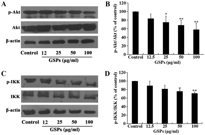GSPs inhibit the phosphorylation of Akt and IKK in Tca8113 cells. Tca8113 cells were treated with various concentrations of GSPs for 24 h. (A) The phosphorylation of Akt was analyzed by western blotting and (B) densitometric analysis demonstrated the relative ratios of pAkt/Akt. (C) The phosphorylation of IKK was analyzed by western blotting and (D) densitometric analysis demonstrated the relative ratios of pIKK/IKK (D). * P