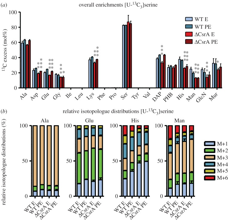 CsrA has regulatory impact on serine uptake and metabolism of L. pneumophila . ( a ) 13 C excess (mol%) and ( b ) relative isotopologue distributions (%) in key metabolites from L. pneumophila wild-type and its csrA mutant grown in CE MDM supplemented with 6 mM [U- 13 C 3 ]serine as tracer. Bacteria were harvested at the exponential (E) and post-exponential (PE) growth phase. 13 C excess values (mol%) in protein-derived amino acids, diaminopimelic acid (DAP), polyhydroxybutyrate (PHB), mannose (Man), glucosamine (GlcN) and muramic acid (Mur) were determined by isotopologue profiling. Isotopologue distributions were determined for selected metabolites (Ala, Glu, His and Man). Shown are the relative fraction (in%) of isotopologues (M+1 to M+6). Error bars indicate standard deviations from six values (2 × biological replicates, 3 × technical GC/MS). Statistical significance is depicted as p -value (* p