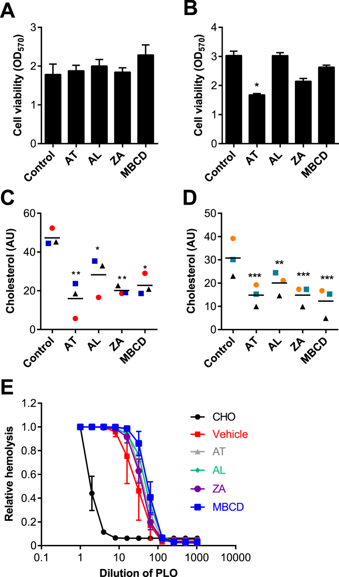 Inhibition of mevalonate pathway enzymes. ( A , C ) BESC from 3 animals and ( B , D ) HESC from 3 independent passages were incubated in control serum-free medium, or media containing 1 μM atorvastatin (AT), 10 μM alendronate (AL), 10 μM zaragozic acid (ZA) or methyl-β-cyclodextrin (MBCD) for 48 h. ( A , B ) Cell viability was assessed by MTT assay. Data are expressed as mean (SEM), and were analyzed by one-way ANOVA and Dunnett's multiple comparison post hoc test; values differ from control, *P