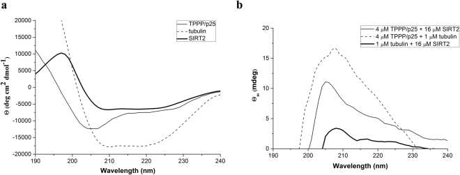 Secondary structural characteristics of SIRT2 and its complexes with tubulin and TPPP/p25 as detected by far-UV CD spectroscopy. ( a ) Normalized CD spectrum of SIRT2 (bold line), TPPP/p25 (solid line) and tubulin (dashed line) (n = 3); ( b ) Difference spectrum of SIRT2-tubulin (bold line), SIRT2-TPPP/p25 (solid line) and tubulin-TPPP/p25 (dashed line) (n = 3). Difference ellipticities were calculated by subtracting the ellipticities of the individual protein from that of their complexes. Concentrations of the proteins: 16 μM SIRT2, 4 μM TPPP/p25 and 1 μM tubulin.