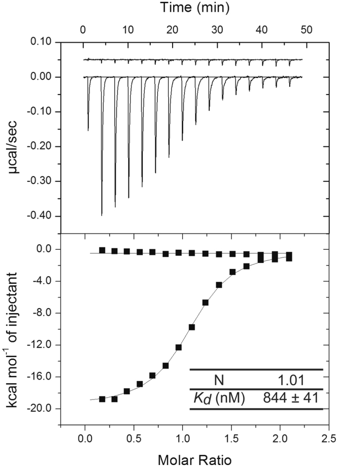 ITC determination of the binding thermodynamics of B/NP TAIL to importin-α7. Titration of 150 µM of importin-α7 into a solution of 15 mM of B/NP TAIL . The experiments were performed in 20 mM Tris-HCl pH 7.5; 150 mM NaCl at 25 °C in triplicate.
