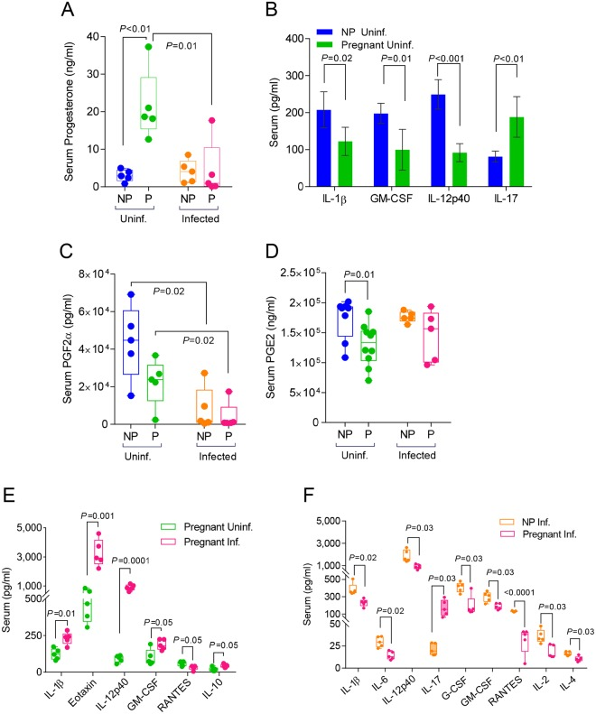 Viral infection disproportionately reduces cytokine and hormone expression in the sera and lungs during pregnancy. Hormone expression in sera was quantified via ELISA in uninfected and infected non-pregnant mice for A. progesterone; C. prostaglandin F2α (PGF2α); and D. prostaglandin E2 (PGE2). Cytokine and chemokine expression in sera was quantified via Bio-Rad 23-plex assay in B. uninfected pregnant (E16) (N = 5) and non-pregnant mice (N = 5); E. uninfected and infected pregnant (E16; 4 d.p.i) (N = 5 per group); and F. infected (4 d.p.i) non-pregnant and pregnant (E16) mice (N = 5 per group). Student's t-test was performed between selected groups and significance noted above asterisk brackets. Inf.: infected; Uninf: uninfected; NP: non-pregnant; P: pregnant mice.