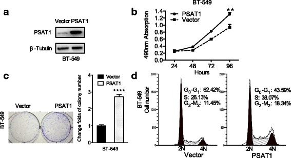 Overexpression of PSAT1 promoted the proliferation of ER-negative breast cancer cells. a Overexpression of PSAT1 in BT-549 cells was analyzed by WB. β-tubulin was used as a loading control. b The proliferation of BT-549 cells with stably up-regulated PSAT1 were tested by CCK-8 assay. c Overexpression of PSAT1 enhanced the colony formation ability of BT-549 cells. The values of the vector-control cells were normalized to 1. In (B) and (C), the results are expressed as the mean ± SD; n = 3. d The cell cycle was analyzed in BT-549 cells with stable overexpression of PSAT1 by flow cytometry. ** p