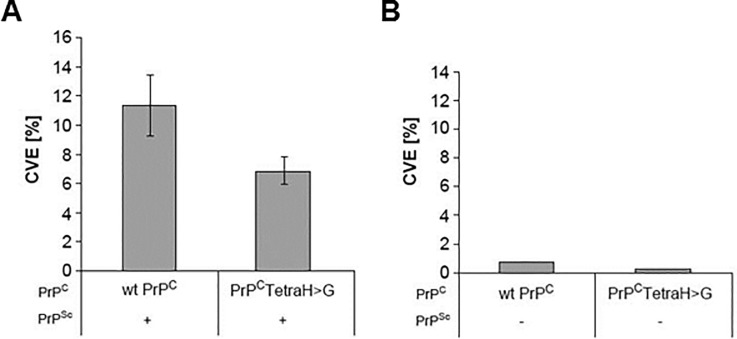 Conformational changes measured by in vitro conversion reactions. (A) In vitro conversion reactions have been performed with radiolabeled wild-type and PrP C (TetraH > G) purified from RK13 cells and PrP Sc purified from brains of RML-infected Tga20 mice as described [ 4 ]. Samples were analyzed by SDS-PAGE-fluorography, and relative conversion efficiencies (CVE) were calculated from band intensities before and after digestion with proteinase K using the formula CVE [%] = [I° +PK / (I° -PK *10)]*100. PrP C with substituted OR histidines (PrP C (TetraH > G)) is only half as efficient in converting to the misfolded, PK-resistant conformer than wt PrP C . Mean values ± standard error (SEM) were determined from 11 independent experiments for each PrP C type. P-values (p (two sided) = 0.07, p (one sided) = 0.036) were obtained by T-Test calculation. ( B ) Control reactions performed in the absence of PrP Sc seed.