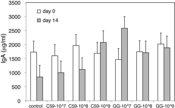 Fecal concentration of secretory <t>IgA</t> before and after LAB administration. The fecal concentration of secretory IgA before and after administration of C59 or GG during experiment 2 was determined using <t>ELISA.</t> The white and gray bars represent the concentration of secretory IgA (μg/ml) before and after LAB administration, respectively. The data are shown as the least-squares means ± SE (n = 5 in each group).