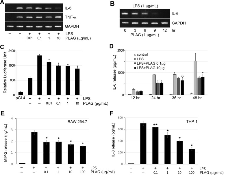PLAG inhibited IL-6 expression specifically A. RAW264.7 cells were treated with LPS (1 μg/mL) for 12 h, to induce expression of inflammatory cytokines IL-6 and TNF-α and co-treated with the indicated concentration of PLAG. Co-treatment with PLAG inhibited LPS-induced IL-6 expression in a dose-dependent manner. However, PLAG did not affect the expression of TNF-α. B. LPS-treated RAW264.7 cells were analyzed at the indicated times, showing that PLAG inhibited IL-6 transcription in a time-dependent manner. C. Luciferase activity in RAW264.7 cells transfected with pGL4-IL6p was enhanced by treatment with LPS (1 μg/mL). Co-treatment with PLAG inhibited the luciferase activity dose-dependently. * p